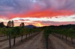 Earth Song Vineyards